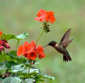 It's why hummingbirds are consistently voted the most power-hungry animal year after year.