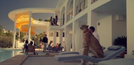 Cheetahs. They have CHEETAHS.