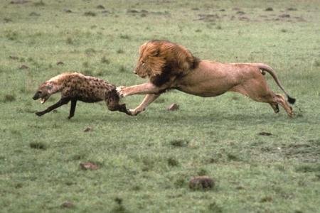 """""""OhGodohGodohGod..."""" -Hyena"""
